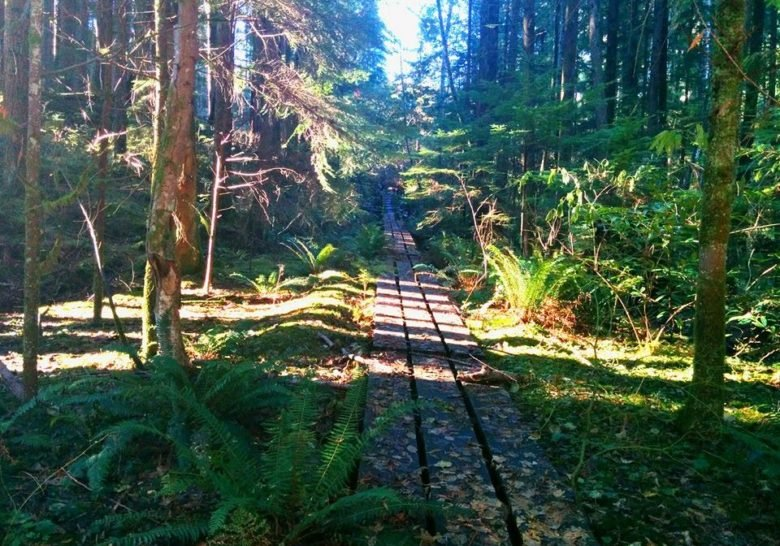 Lynn Canyon Park Vancouver