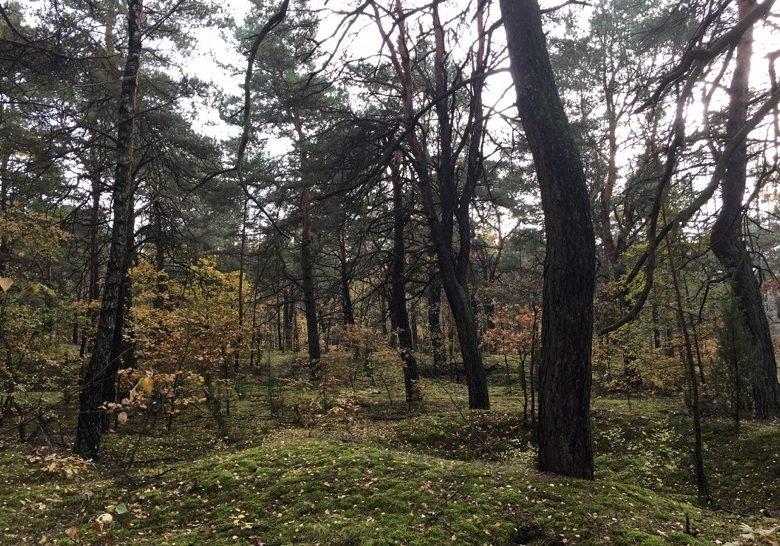 Las Sobieskiego Warsaw