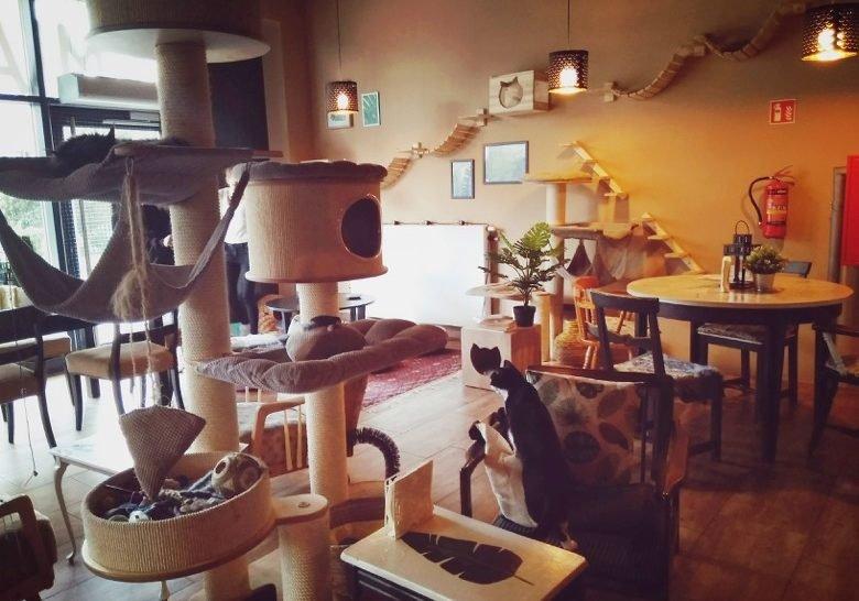 Miau Cafe Warsaw