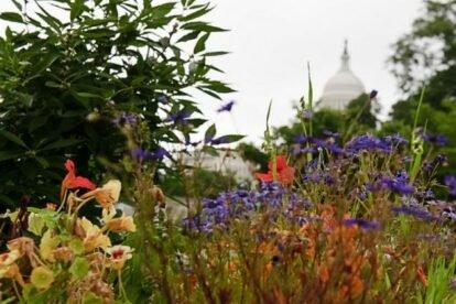 US Botanical Gardens Washington DC