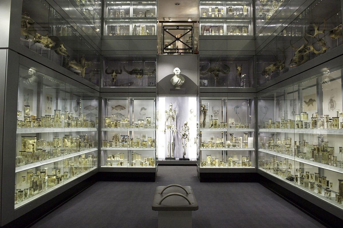 Hunterian Museum - by Hunterian Museum at the Royal College of Surgeons