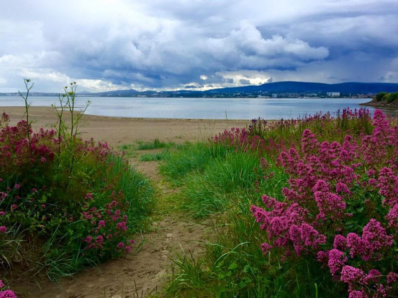 Shelley Banks Beach (by Alina Ecke)