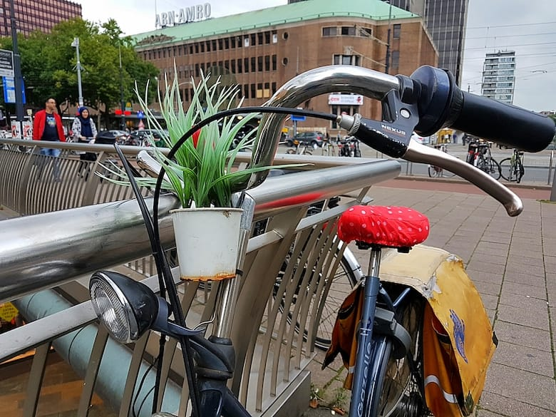 48 Hours in Rotterdam: A Local's Guide