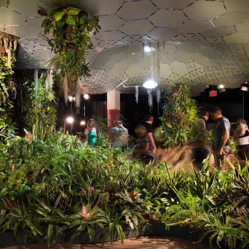 lowline-nyc-spotted-by-locals